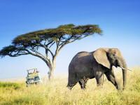 Momentul terifiant în care mai mulți turiști sunt alergați de elefanți. VIDEO