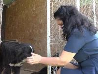 Patrupedele din curtea adolescentului care a ucis cu lopata un câine au fost salvate de autorități