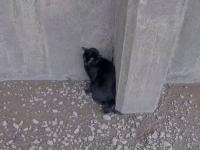 Operațiune de salvare neobișunuită. Cum au salvat o pisică rămasă blocată pe un mal al râului