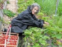 Jurnalistă germană, angajată la o fermă la care lucrează și români: O muncă pe care doar ei o pot face
