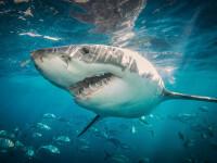 VIDEO. Momente dramatice. Doi adolescenți au fost urmăriți de un rechin