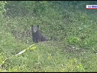 Misiune imposibilă în Brașov. Un pui de urs căzut într-un puț foarte adânc a fost salvat