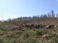Platformă contra mafiei pădurilor. Guvernul va monitoriza cât se taie și unde merge lemnul
