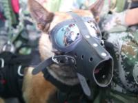 Un câine militar din China a efectuat primul său salt cu paraşuta