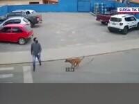 VIDEO viral. Un bărbat a fost accidentat de un câine lângă trecerea de pietoni