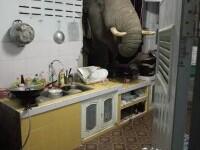 Elefantul din bucătărie. O familie din Thailada a avut parte de o experiență mai puțin obișnuită în toiul nopții