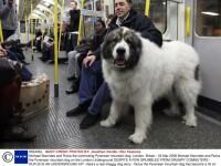 Rufus, mascota metroului londonez!