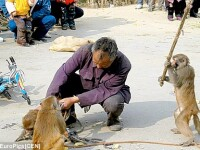 A luat-o pe coaja de la maimute!