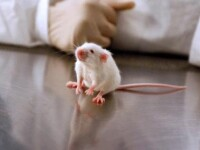 Parkinson se poate trata! Cercetatorii testeaza un dispozitiv nou