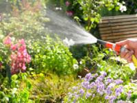 INCREDIBIL! Plantele trimit SMS-uri cand au nevoie de apa