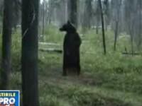 O ursoaica cu pui e vanata dupa ce a sfasiat doi mistreti de la zoo