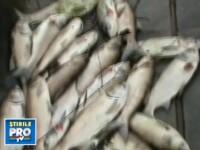 Dezastru ecologic! Tone de pesti morti in lacurile din Capitala!