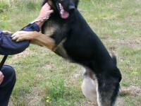 Un caine politist din Israel a ajuns la veterinar dupa ce a fost muscat de un suspect