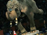 Circul Safari din Budapesta a facut show la Sibiu