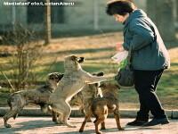 Planul de lupta al Bucurestiului cu cainii maidanezi agresivi: infometarea