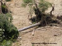 Taierea ilegala a padurile se plateste scump: 200.000 de lei, in Arges