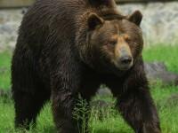Un barbat din Maramures a fost atacat de un urs