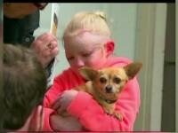 Fetita de 8 ani din Canada, salvata de atacul unui pitbull de catelusa ei chihuahua