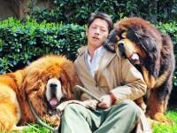 China: Un caine din rasa mastiff tibetan, vandut cu aproape 1,4 milioane de euro