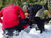 Prima scoala canina de interventie se deschide la Padina. Salvamontistii vor antrena cainii sa fie eroi