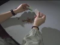 Descinderi la traficanti si consumatori de droguri din Ploiesti. 46 de persoane au fost duse la DIICOT pentru audieri