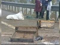 Scene ca in filme in China. Ce au facut cativa soferi dupa un accident in care s-au rasturnat 100 de stupi cu albine furioase