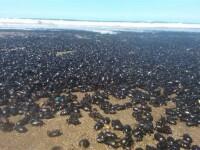 Fenomen neobisnuit in Argentina. O plaja a fost acoperita cu milioane de gandaci. FOTO