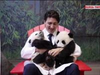 Premierul Canadei face din nou furori, dupa ce s-a pozat tinand in brate doi ursi panda nou-nascuti