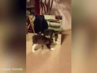 Reactia unei pisicute in momentul in care se vede in oglinda pentru prima data a cucerit internetul