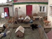 A adunat zeci de caini in curte, pe care nu ii hraneste si au ajuns sa se manance intre ei. Politia poate doar sa o amendeze