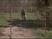 Situatia tragicomica din parcul Herastrau. Motivul pentru care un gard ridicat peste noapte a fost dat jos de primar