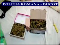 Retea specializata in trafic de droguri, destructurata in urma a 7 perchezitii la Cluj. Ce au gasit politistii in locuinte