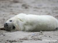O tanara a incercat sa opreasca 8 adolescenti care voiau sa ingroape un pui de foca de viu. Cum a fost agresata. FOTO