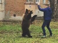 Un rus si-a scos ursul la plimbare in fata blocului in week-end. Acuzatia bizara pe care i-o aduc acum autoritatile