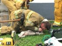 Moment emotionat la stingerea unui incendiu, in SUA. Un caine a fost resuscitat si readus la viata de un pompier. VIDEO