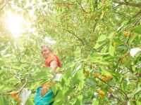 Fructele si legumele pot fi TOXICE din cauza chimicalelor cu care sunt stropite. Micii producatori nu sunt controlati