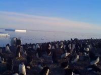 Cea mai mare colonie de pinguini, descoperită în largul Peninsulei Antarctica. Numărul exemplarelor