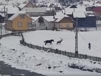 Imagini unice în România. Un cerb coborât din pădure se împrietenește cu un cal. VIDEO