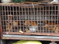 Imagini tulburătoare. Zeci de câini închiși în cuști, pentru a fi mâncați