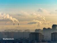 Cum ne afectează, concret, poluarea din marile orașe. Orice plantă aflată în apropiere ajută
