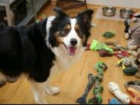 Câinele care i-a uimit pe cercetători. Ce este capabil să facă