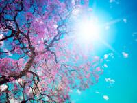 Vremea azi, 6 aprilie 2020. Prognoza meteo în București și în țară