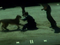 Curier atacat de o felină uriaşă, când livra un colet. Cum l-a salvat o poliţistă