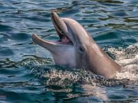 """Un bărbat a întreținut relații sexuale timp de un an cu un delfin: """"M-a sedus"""""""