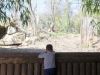 Imagini revoltătoare la o grădină zoologică. Vulpi, nevoite să se hrănească cu o alpaca