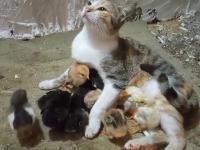 Imagini incredibile cu două pisici și mai mulți pui de găină. Au devenit cei mai buni prieteni