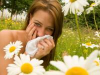 Alergiile la polen ar putea fi tratate cu... polen!