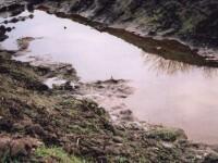 Mlastina cu reziduuri petroliere in Ploiesti! Cosmar ecologic!