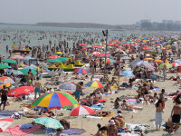 Meniu pe litoral: muste, alimente cu miros de urina, sosuri expirate