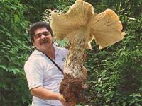 Cea mai mare ciuperca din Romania cantareste 4 kilograme!